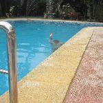 Skönt i poolen