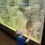 Our son admiring the cool color changing bubble thingyvas you get off the elevator.