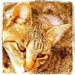 la gata Maya