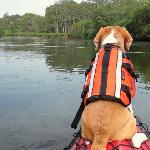 犬連れ川下り