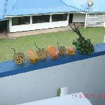 Local fruits...view from hotel room