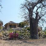 Bungalow mit Baobab