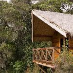 Saha Forest Camp Foto