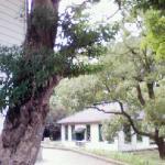 旧事務棟(写真左)より旧細菌検査室を望む