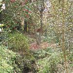 Fabulous woodland
