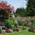 June 2011 garden