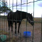 Cavallo dell'agriturismo