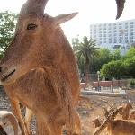 зоопарк в Агадире