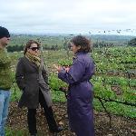 Winemaker explaining Viticultural Process