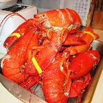 Fresh caught lobsters, $4.99 a pound