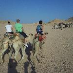 Camel Ride - Star Gazing