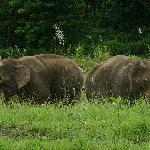 The lodges elephants in the grounds