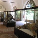 Museo di Storia Naturale e del Territorio