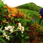 秋の花たち