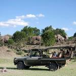Serian - game drives in safari 4WD