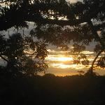 Sunset in the treetops