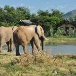 Chalets with Elephants