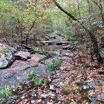 Creek on Cedar Falls Trail