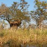 la capanna sull'albero