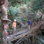 Roots Bridges