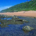 Our beaches, rock pools & dune forests