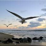 One happy seagull