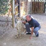 My husband with Lex, the purring cheetah