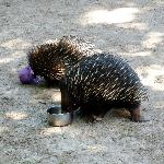 Little Echidnas