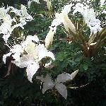 Flower in the garden from Kasemgarden Hoel