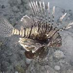 lion fish taken on my Digital Underwater Photography course