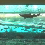 Shark Tank!