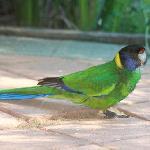 A parrot on the verandah