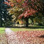 Beautiful walk in the park in Autum