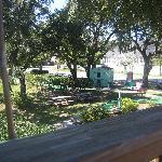 BuddyRoe's front yard.