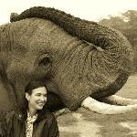 Things to Do - Elephant back safari's