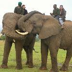 Elephant back safari's