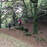 woodland on slopes on way up
