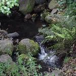 Stream and native bush
