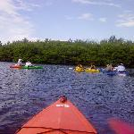 Mangroves Lido Key