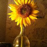 a local sunflower