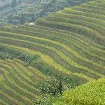 the longji rice terraces