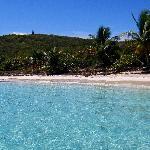 Culebrita Playa Tortuga..