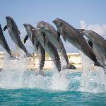 The Dolphin Crew