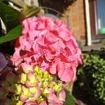 hydrangea welcomes you
