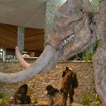 The mastodon skeleton in the museum