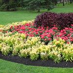Flowers garden in south side