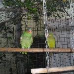Adorable resident birds