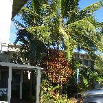Kaua'i Palms Hotel