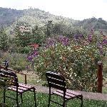 Ausblick vom Bungalow am Hang