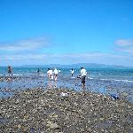 Gathering mussels in at low tide near Te Mata Lodge